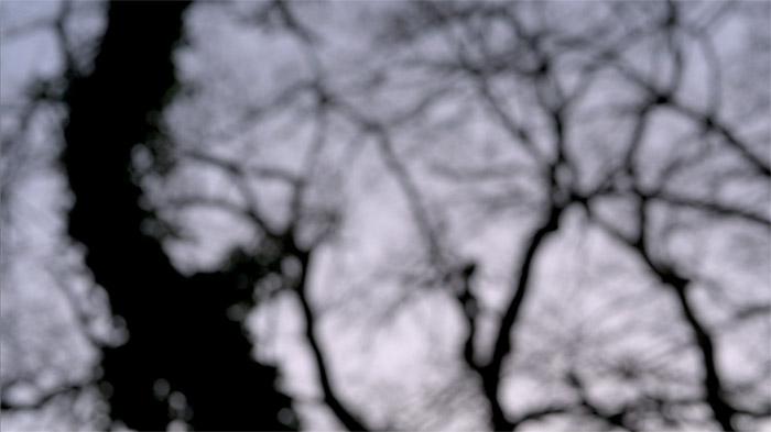 Der Wald - oben. (Videostill)